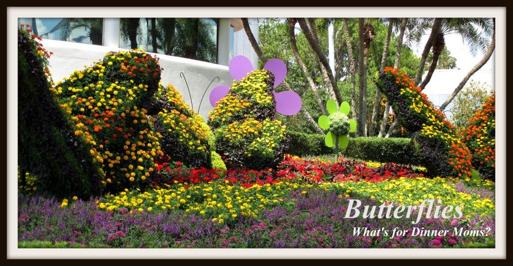 Butterflies - Epcot Flower and Garden Festival