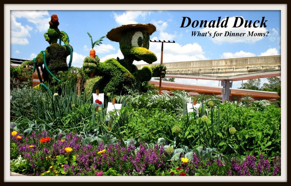 Donald Duck - Epcot Flower and Garden Festival